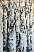 Birches  24X28 acrylic